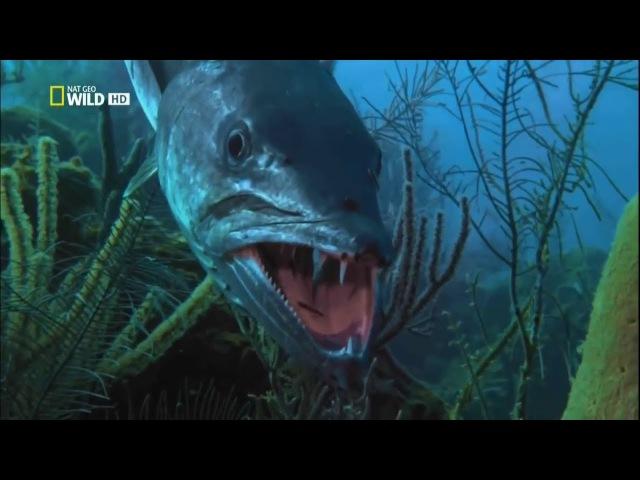Документальный фильм - Самые опасные животные. Морские глубины. HD (2009) ljrevtynfkmysq abkmv - cfvst jgfcyst bdjnyst. vjhcrbt