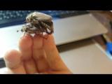 майские жуки хоум видео 75+