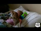 ТОП 10- ДЕТИ и КОТЫ -- МЛАДЕНЦЫ и КОШКИ -- НЕРЕАЛЬНО СМЕШНО-)))))