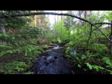 Relaxing Nature Sounds-Study-Sleep-Meditation-Water Sounds-Bird Song