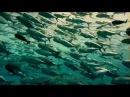 Beautiful music and ocean-Красивая музыка и Океан