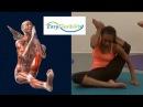 How to Eka pada sirsasana Yoga Pose Eka Pada Sirshasana Muscle Anatomy EasyFlexibility
