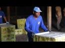 Imigrantes haitianos encontram trabalho no Paraná