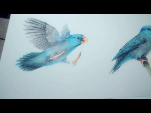 Ankat Hermanns Illustrator - The Pacific Parrotlet » Freewka.com - Смотреть онлайн в хорощем качестве