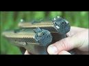 как сделать мини пистолет на капсюлях КВ-22 ? -how to make a mini gun on the capsule?