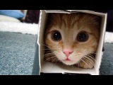 Funny Cat Videos Compilation 2014 ~ Best Fail Cute Cat Videos Compilation