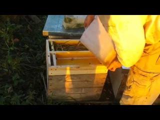 кормить пчёл в зиму 17.09.2014г.