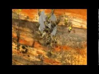 Весна 2014.  Пчелы, рыбы, птицы, цветы. Вообщем видео ни о чем и обо всем.