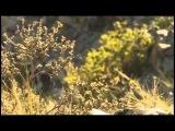Дух огня в мире Шамана / Фильм обряд (2015)