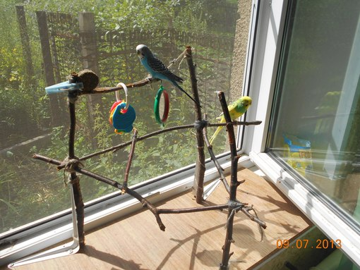 Стенды для попугая своими руками