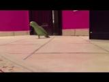 Зловещий смех попугая - http://vk.com/sasisa_ru