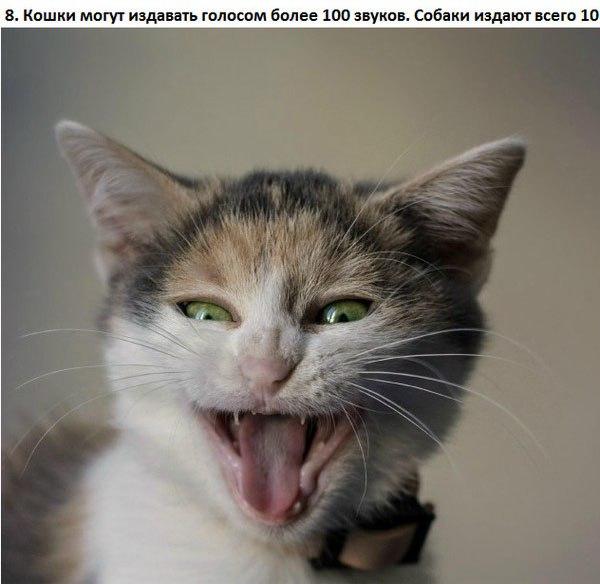 10 интересных фактов о кошках
