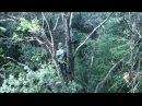 Pilou34 présente chasse à l'arc du chevreuil a l'affût dans les arbres