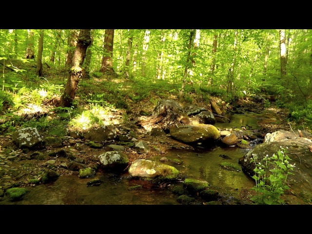 60 Minutes of Binaural Woodland Ambiance (Nature Sounds Series 6) Trickling Stream Birds Sounds
