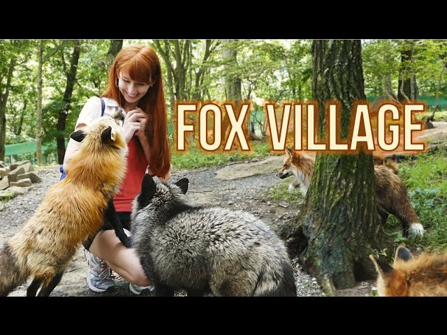 Fox Village in Zao Japan! 蔵王きつね村・kitsune mura