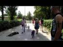Агрессивный Шнауцер Перец(Агрессия на собак)