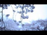 KASHIWA Daisuke - april.#19 (MUSIC VIDEO)