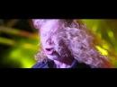 NH7 Weekender Megadeth Trailer