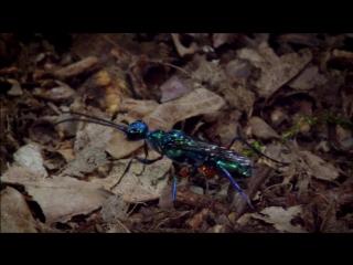 Микромонстры с Дэвидом Аттенборо (Micro Monsters with David Attenborough)