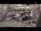 Охота на гуся весной в Рязанской области