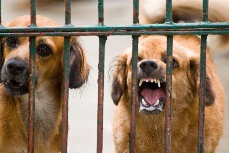 В Ростовской области ветеринарные врачи в двух случаях диагностировали бешенство