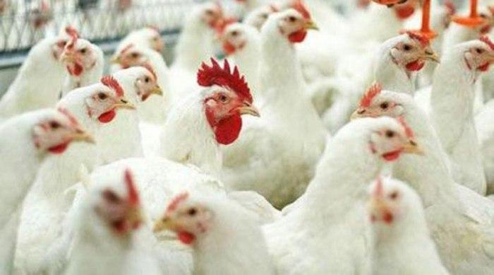 Донские ветврачи объясняют жителям, что нужно защищать свои подворья от гриппа птиц
