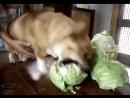 Dog gets revenge on his family's murderer