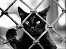 Александр Михель Черный кот
