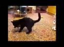 Кот против горностая, прикольное видео, приколы с животными, прикол с кошкой, приколы 2015 !