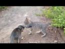 Обезьяна против кота