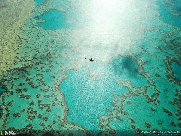 Большой Барьерный риф, Австралия. Автор фото: Wayne Pope.