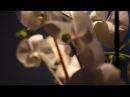 Interior Design - Orchids