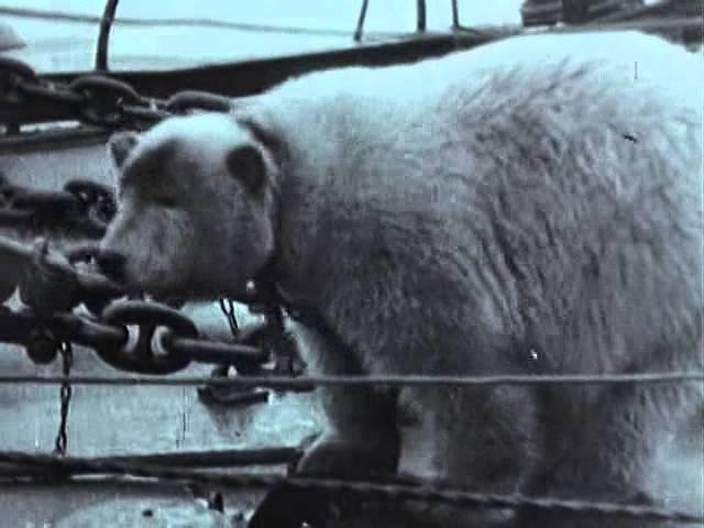 Великая Отечественная 06 Война в Арктике