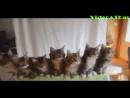 Котята - очень синхронные животные!