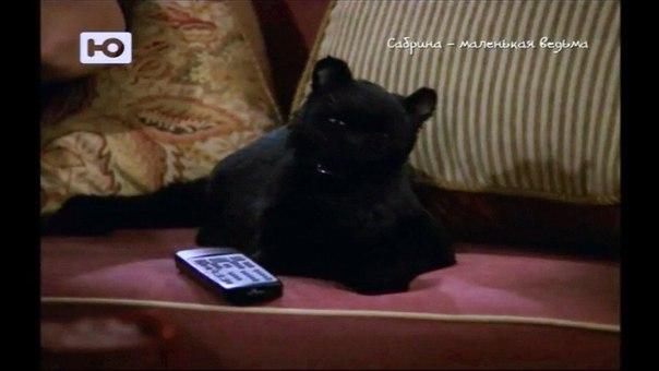 Сериал про чёрного кота