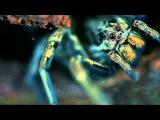 Pleasurekraft - Tarantula (Napalm &amp d-phrag Tarantella Remix)