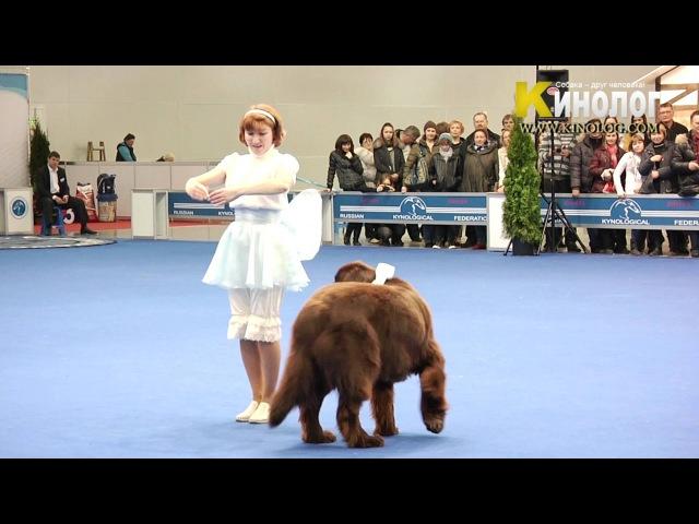 Dog Show Eurasia 2012 / Russia / Moscow. Freestyle.