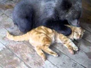 Мишка и кот