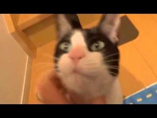 Вот так кошка встречает хозяина