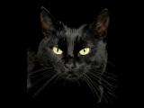 Черный кот из альбома Каверы Вкусняшки 2015