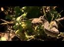 Мисливці за зміями