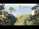Light Music - relaxing instrumental music - Forest