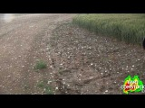 BRIEF TORNADO AND LARGE 3 INCH HAILSTONES POUND COLORADO (061110)
