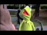 Kermit the Frog You are 100 Percent Wrong