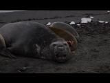 Морской слоняра и его горем)