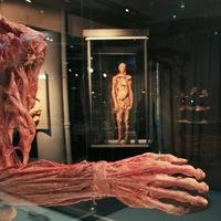 экскурсия в анатомию