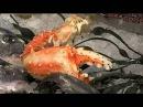 Среда обитания Ядерная рыба