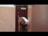 Webcam Toy под музыку Невiдомий - З Дньом Раждения.... Picrolla