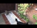 Наши животные: флегматичный кот Бася и неугомонный собачка Фунтик.