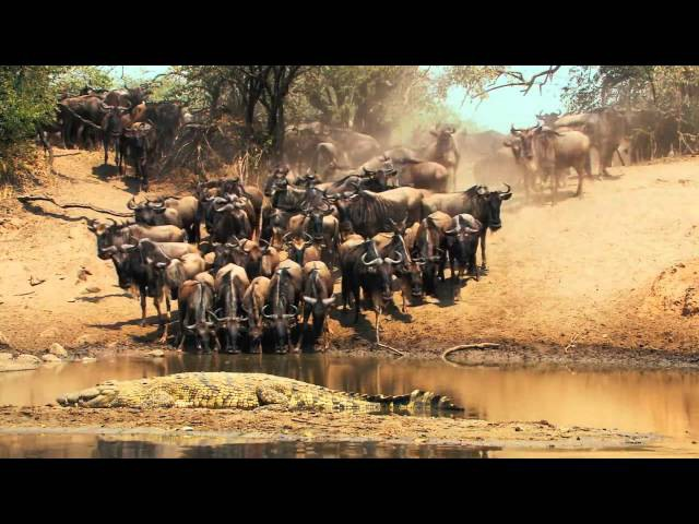 Национальный парк Серенгети _ Serengeti (2011)